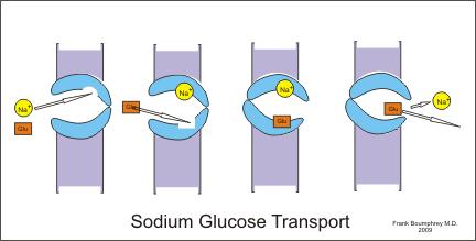 難病指定の脂肪萎縮性糖尿病一亜系の治療に成功