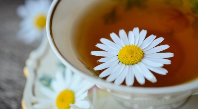 Chamomile – The oldest herb from Europe for tranquillizer and sleep-inducer.