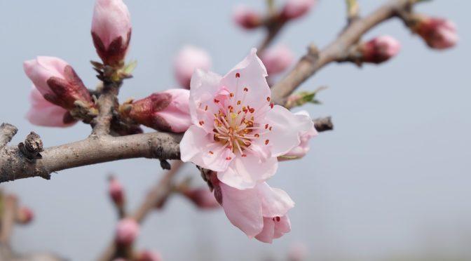 春のうつ 春になると体調がおかしくなる、気分が落ち込むことはありませんか?