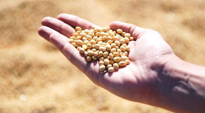 大豆イソフラボンを少量摂取することで老化に伴う筋力低下を軽減か-高齢化社会を迎えるにあたって-