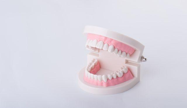 歯が少ないと肺炎死のリスクが上がる?!歯の喪失と肺炎死リスクの関係