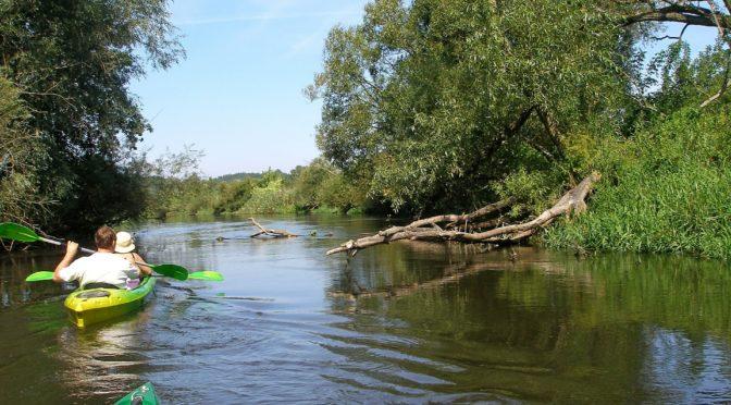 川などの水辺で感染するレプトスピラ症とは リスクの高い地域では注意が必要